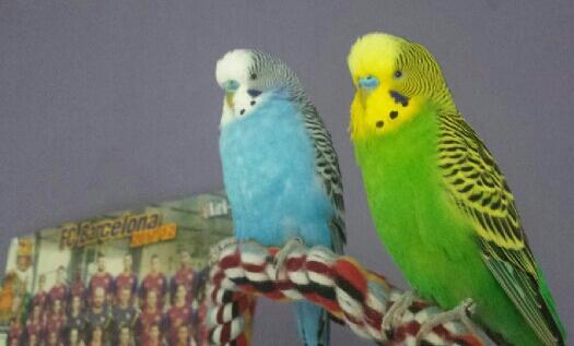 Toni und Hansi