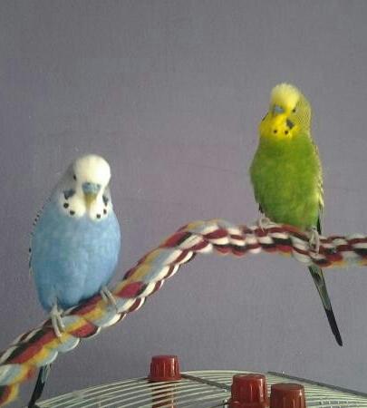 Toni und Hansi 2