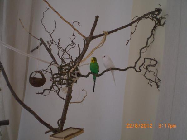 Oskar und Franzi auf ihrem Baum
