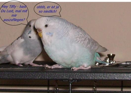 Kiki und Tiffy Date