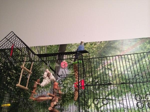 Blue auf Käfig