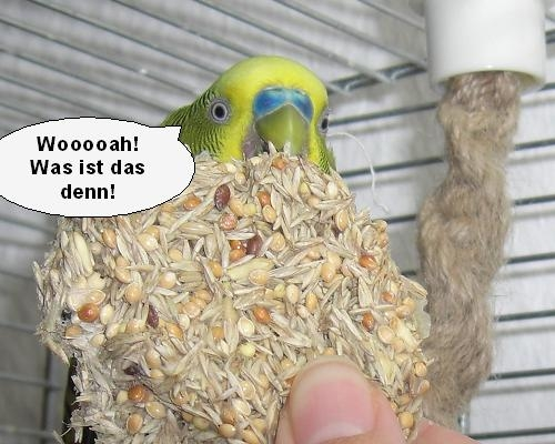 Vogelcomik2