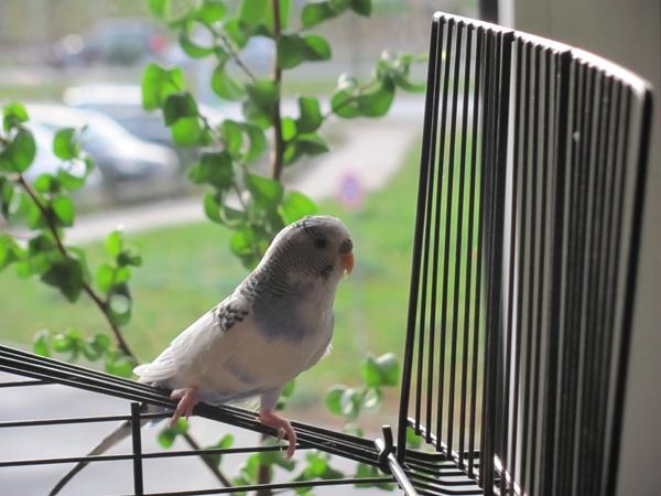 einsame Henne sucht neues Zuhause