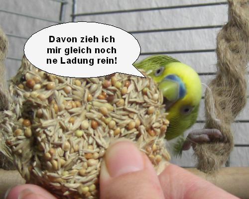 vogelcomik3