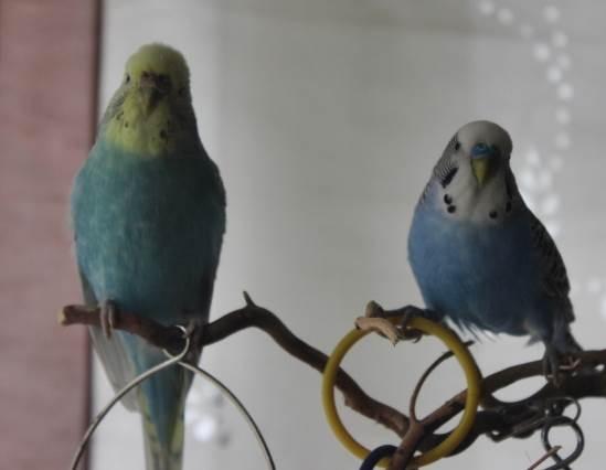 Bubu und Balu auf Freisitz