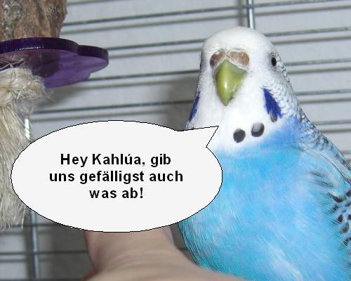 Vogelcomik4