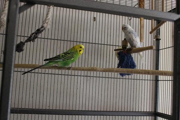 Mäxchen und Paul im Käfig