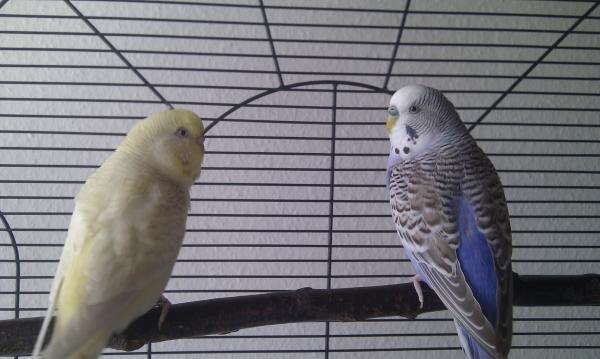 Lilly und Moritz im Käfig