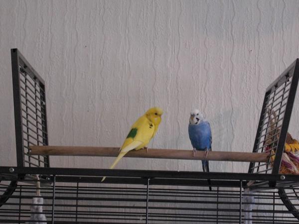 Dori und Fili auf Freisitz