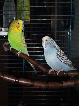 2 Hennen suchen ein Zuhause