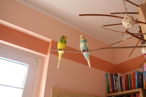 Bonny und Clyde auf Freisitz