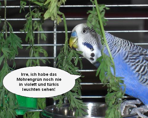 Humor6