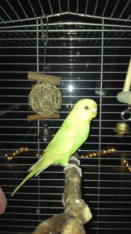 junge Henne sucht neues Zuhause