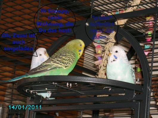 Tiffy, Snoopy und Zausi