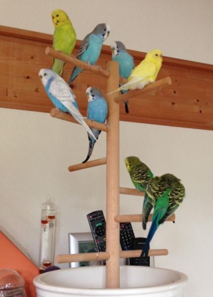 Welli-Familie auf Freisitz