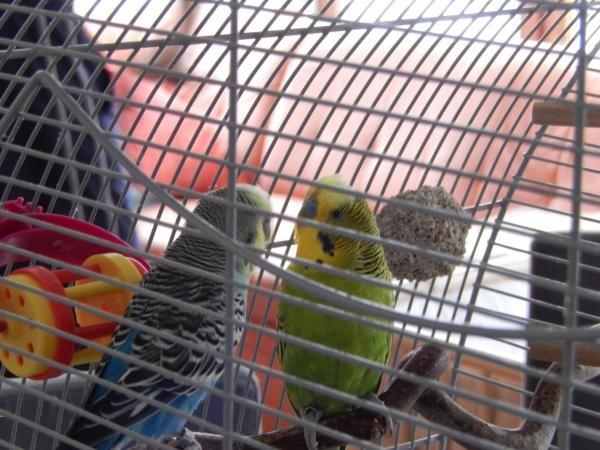 Fritzi sucht neues Zuhause