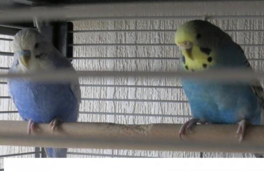 Coco und Sammy im Käfig