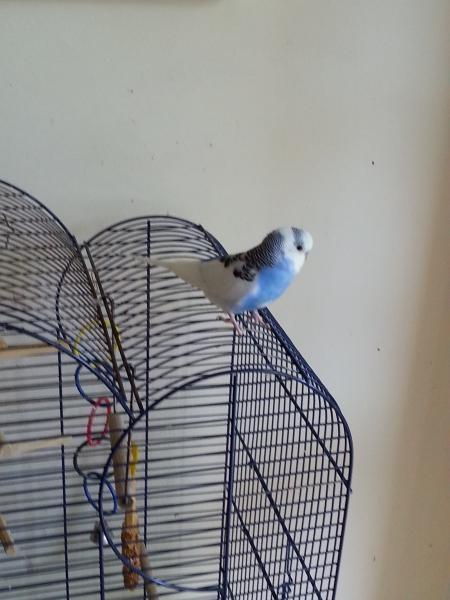 Theo auf Käfig