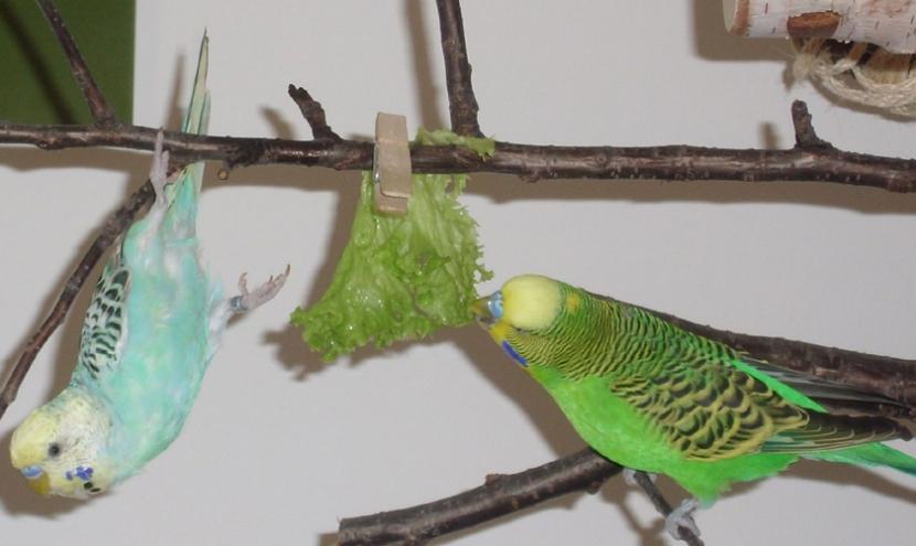 hängen