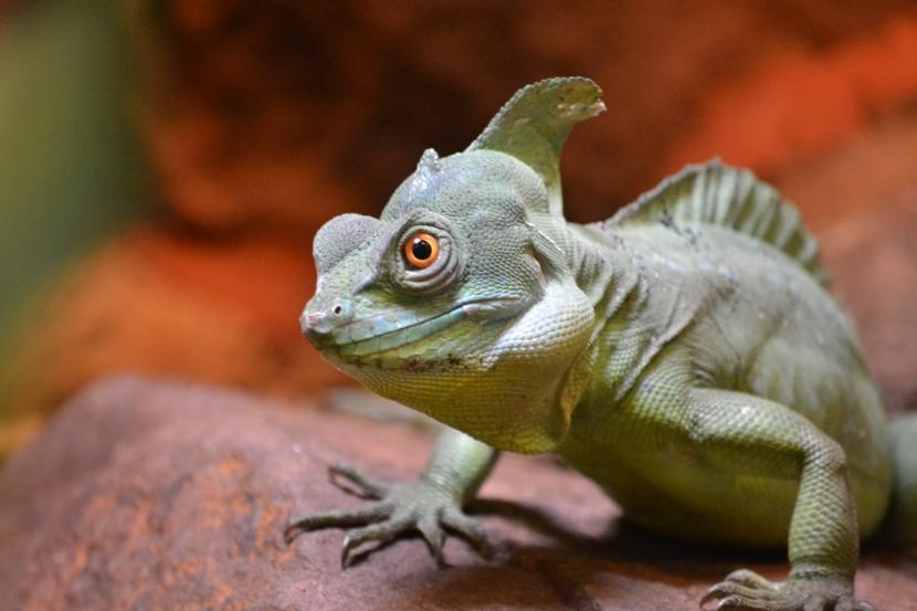 Allwetterzoo Reptil