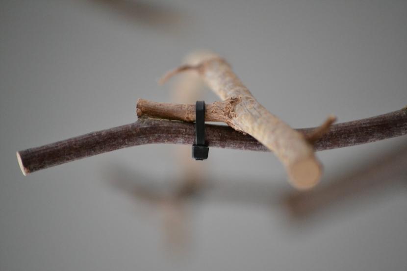 Verbindung Ast Kabelbinder