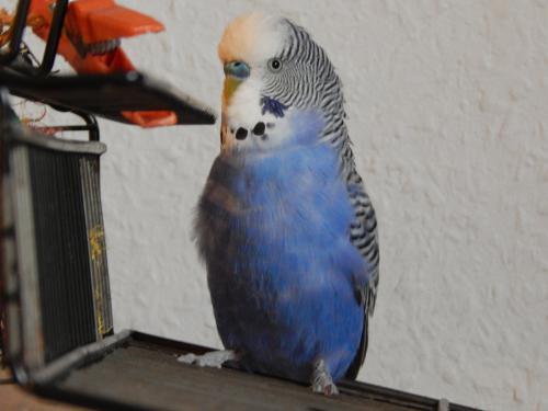 blauer-Luke