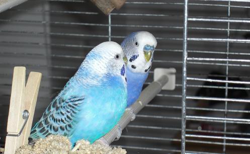 Baileys besucht Tecquila im Käfig