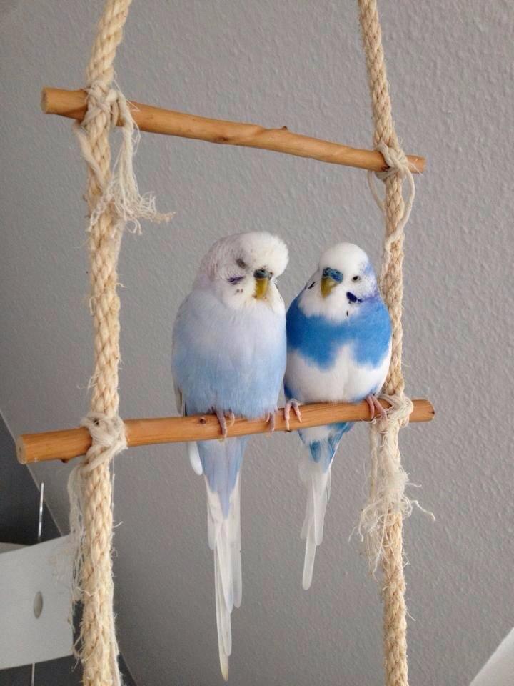 birdkeeper kw 50