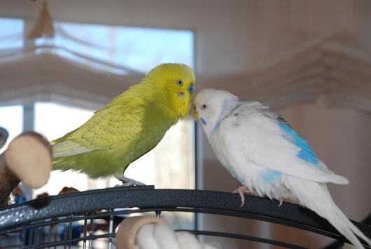 Emilie und Birdy