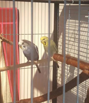 Boomer und Lilly