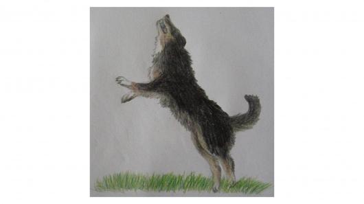 Hund springt nach Ball