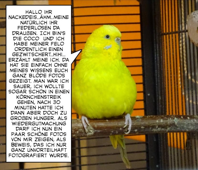 coco erzählt1
