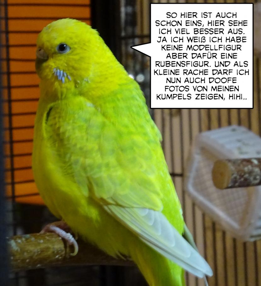Coco erzählt 2