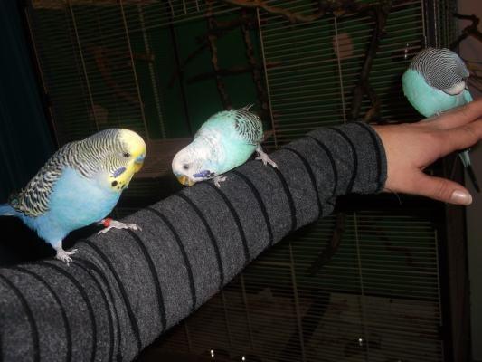 Flauschis auf dem Arm