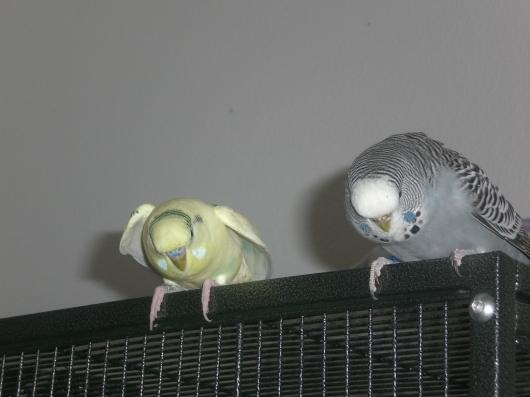 Pauline&Quintus