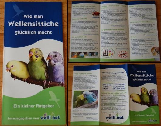 Flyer von welli.net