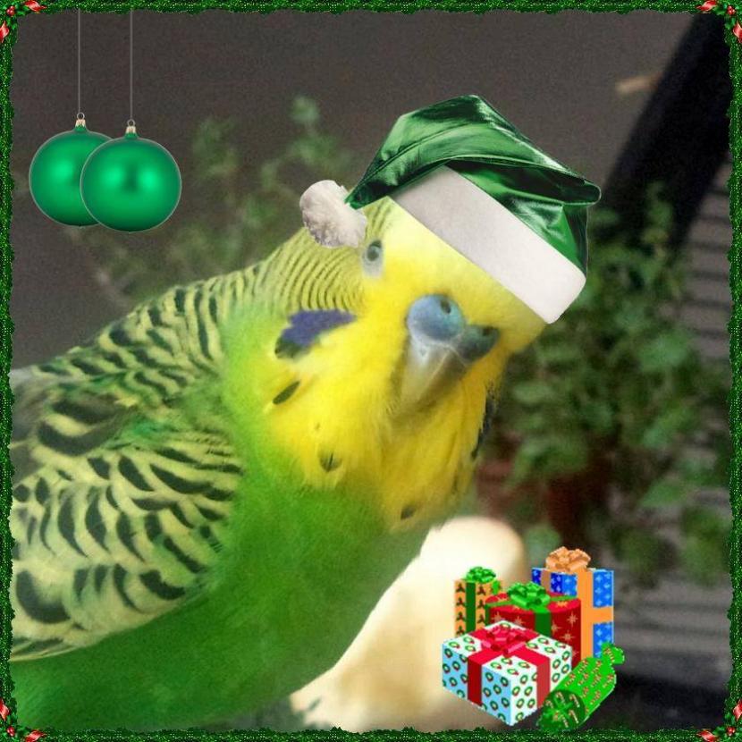 grüner Weihnachtswelli mit Geschenken