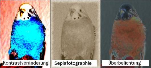 Hier wurden verschiedene fotogaphische Effekte benutzt, Kontraste, Belichtung und Farben verändert