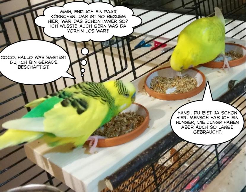Hansi und Coco futtern