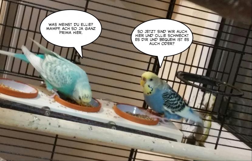 zwei starke Hennen