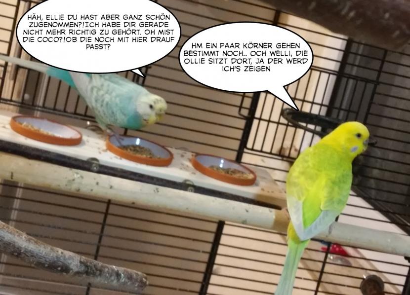 Ollie und Coco