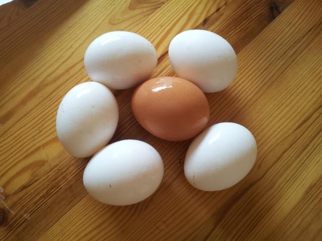 sechs Hühnereier