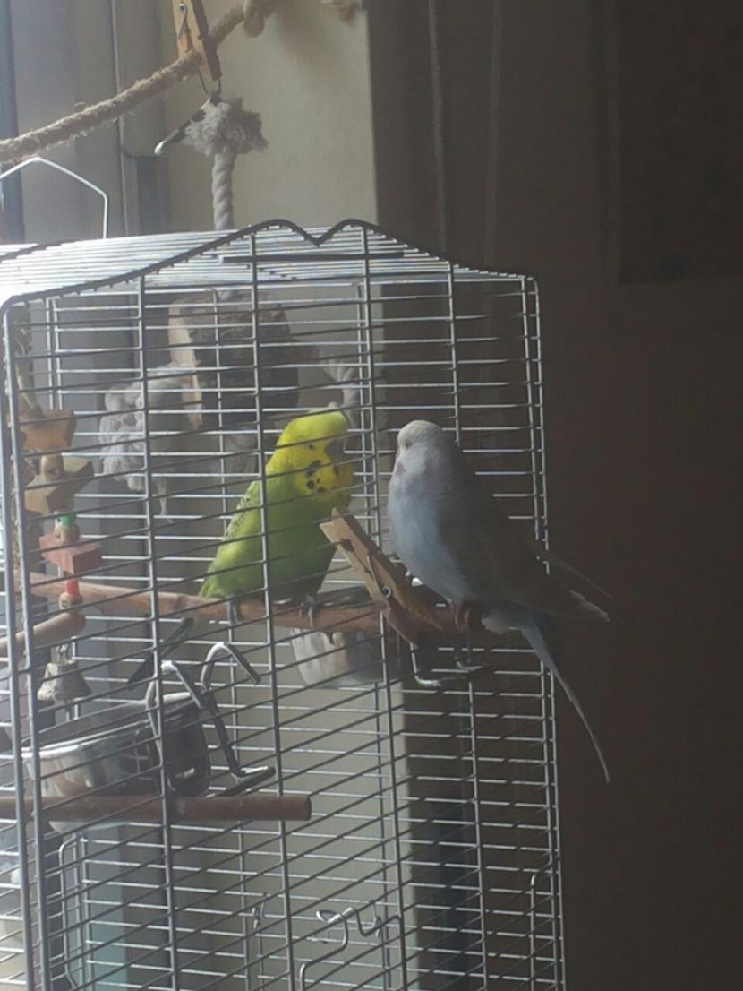 Tiffy und Yani