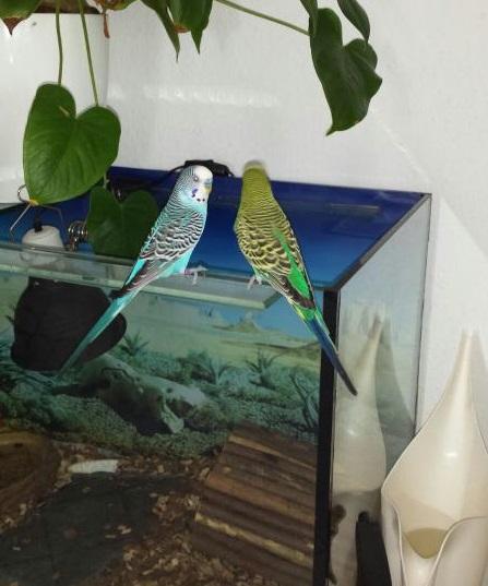 Kescha und Toscha