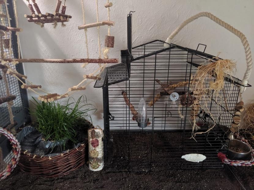 Vogelzimmer 3