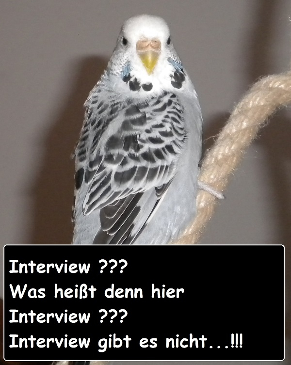 interview wellensittich