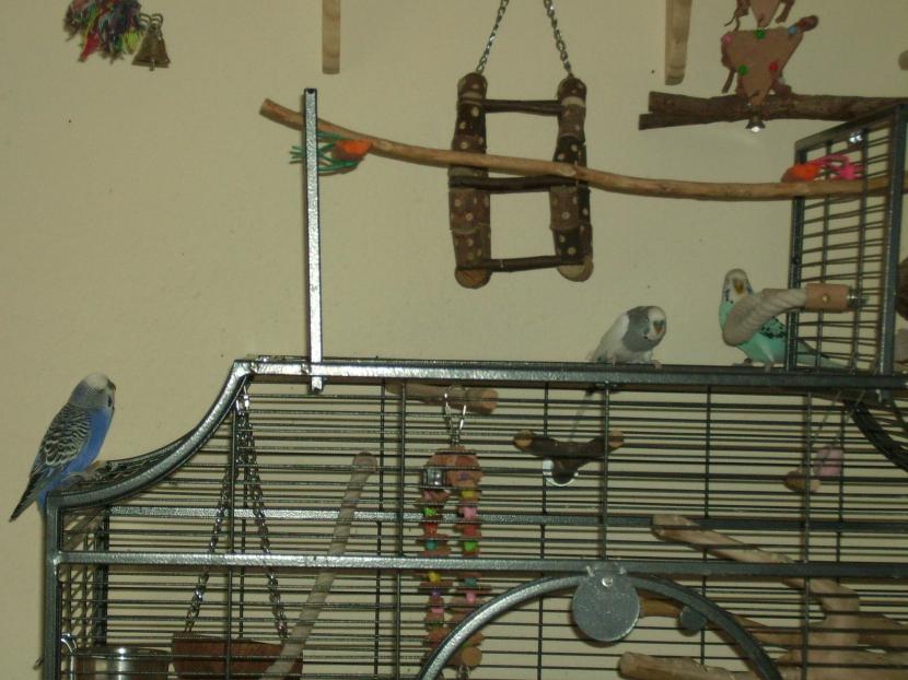Jan auf dem neuen Käfig