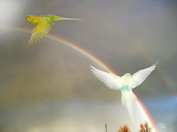 Jenseits des Regenbogens