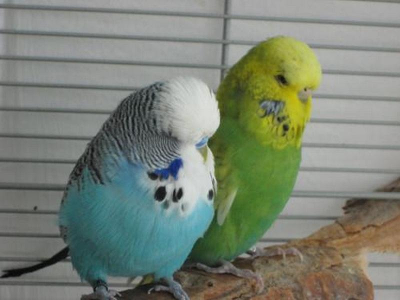 Jessy Blue und Sunny Wellipaar KW 16 - 16