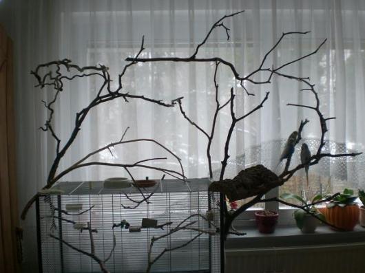 ...hält die Vögel fit und gesund